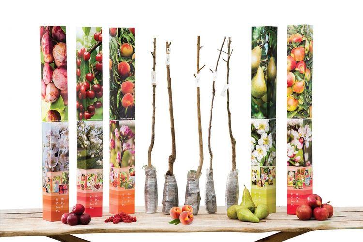 Korting Set van 5 verschillende fruitbomen (85 100 cm)