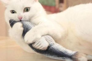 Bewegend kattenspeeltje