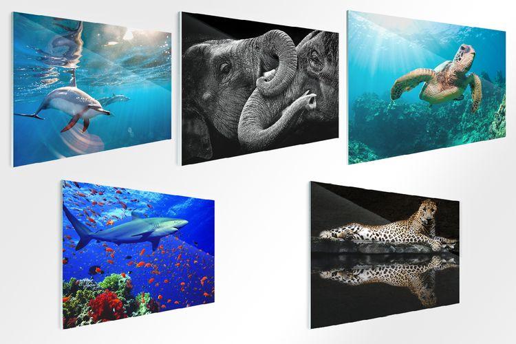 Wilde dieren op glas (40 x 60 cm)