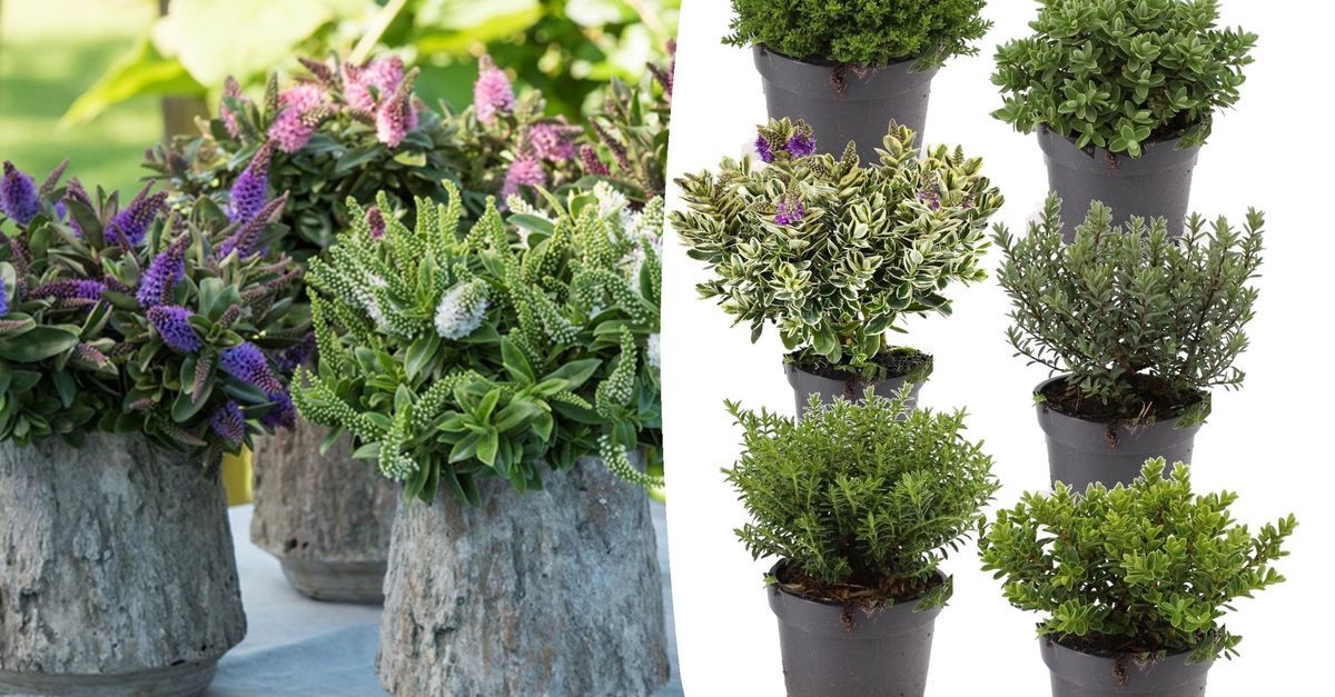 Lot de 6 plantes différentes (15 cm)