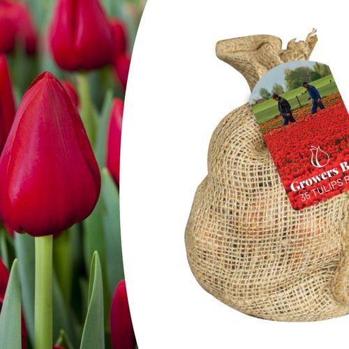 Zak met rode tulpenbollen