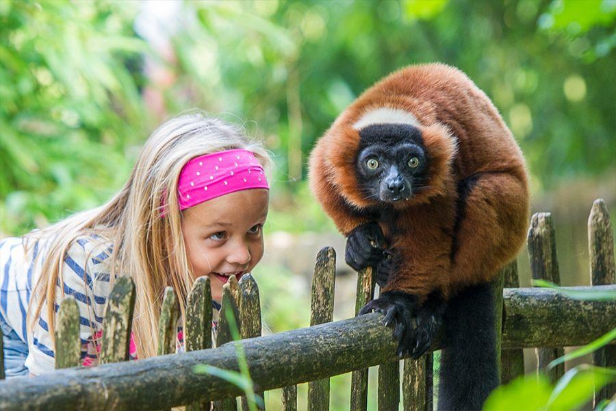 Laatste kans Apenheul Maak kennis met 35 soorten apen Arnhem
