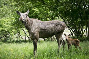 Tickets pour le parc animalier Forestia (2 p.)